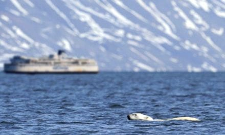 New aquatic bear crossing to result in 90% reduction in summer ferry schedule
